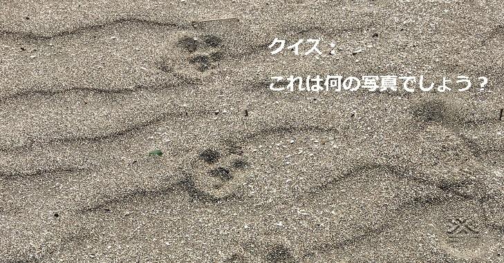 アイキャッチ_砂浜ワンコ肉球