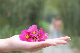 handful of pink small flowers